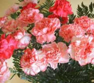 Fun Facts about Carnations…
