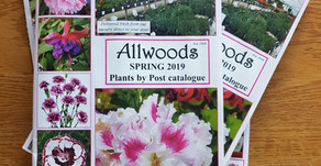 New Year, New Catalogue, New plants