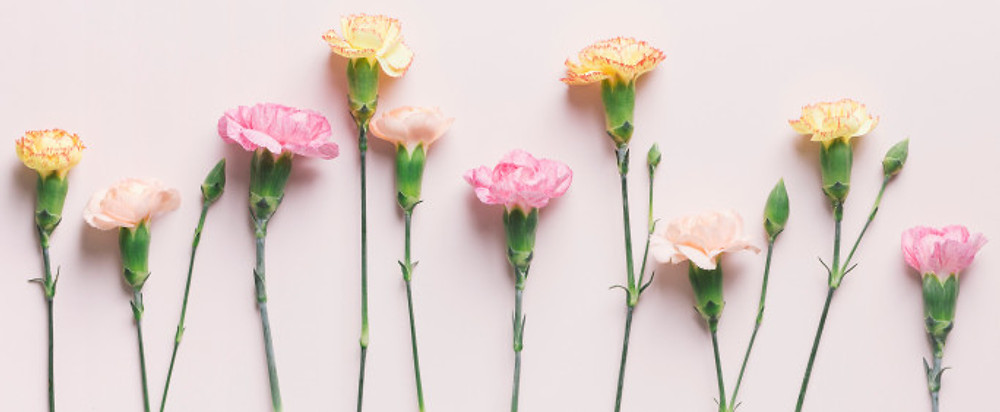 Carnations Crop