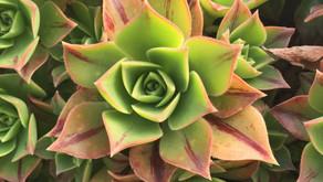 Stunning Succulents…