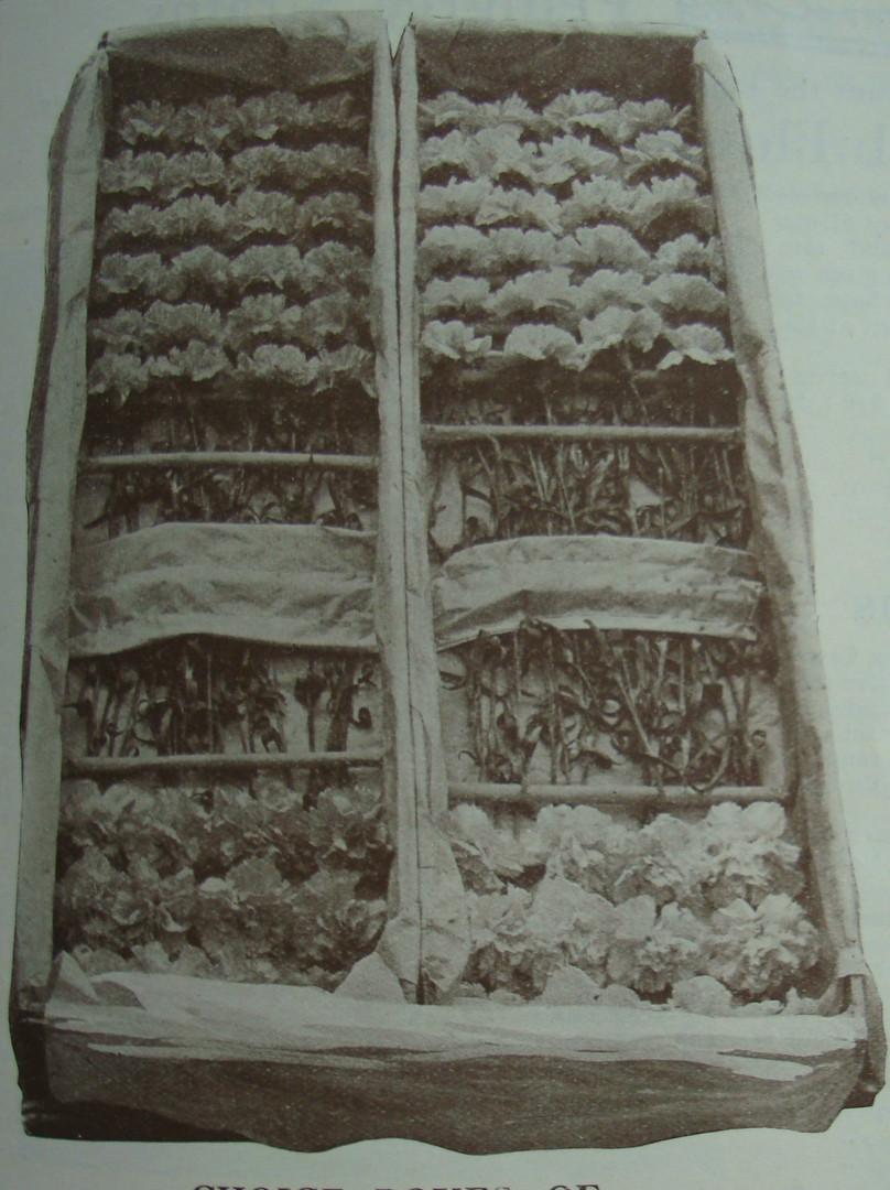 Packed box 2 Allwoods History crop.JPG.j