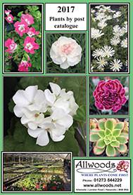 Allwoods Autumn Catalogue 2017