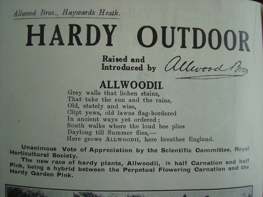 Allwoods Allwoodii pinks as designated by the Royal Horticultural Society Scientific Committee