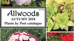 What's new with Allwoods?