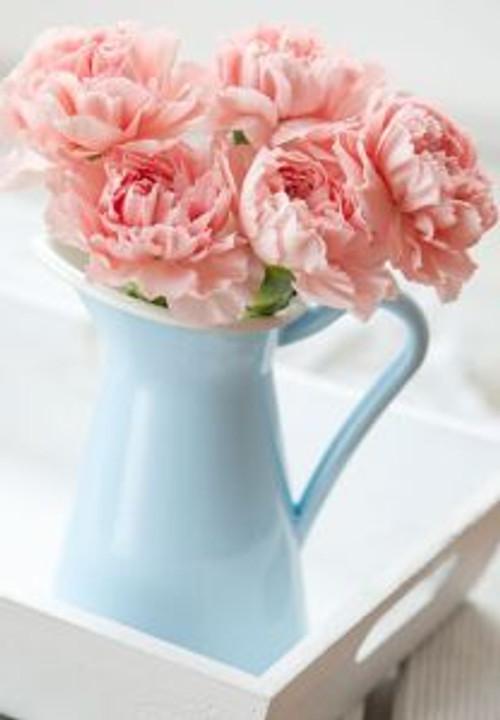 Carnation jug