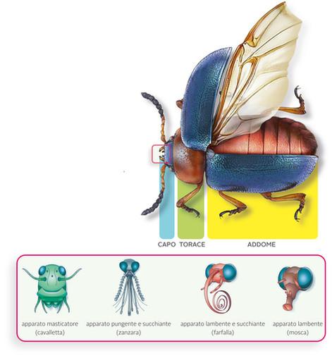 arthropod anatomy