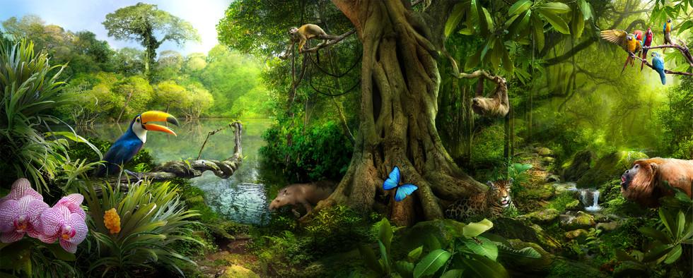 rainforest climate - photos: Asset Library Pearson