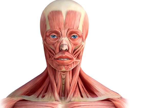 muscle of human face