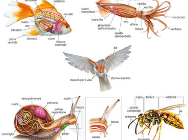 anatomy - animal world