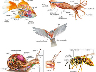 anatomy - animal world