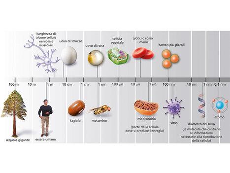 biology diagram