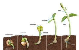 process of seed germination