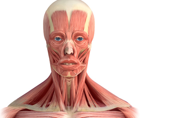 muscle-face.jpg