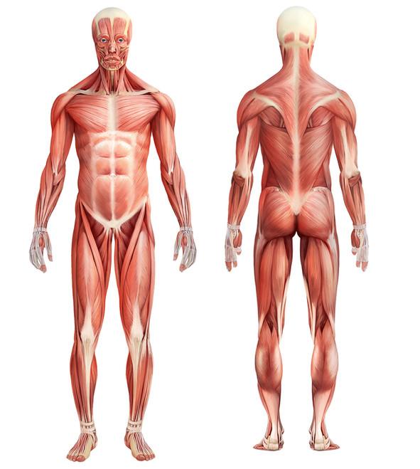 muscolare-home.jpg