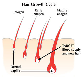 EOS hair growth cycle.jpg
