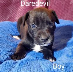 5 - Boy Daredevil