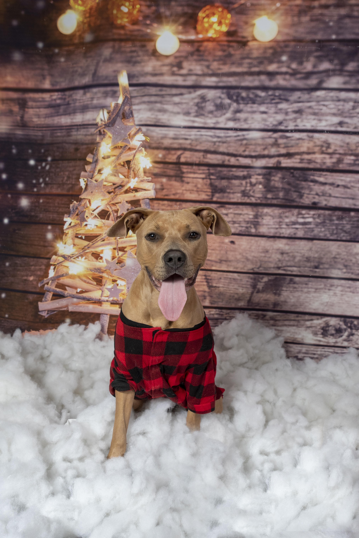 Heidi_Christmas2020_019