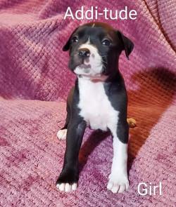 7 - Girl Addi-tude