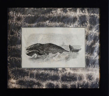 Polar Right Whale
