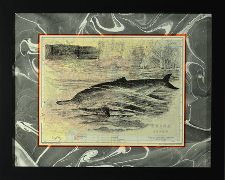 Yantze River Dolphin
