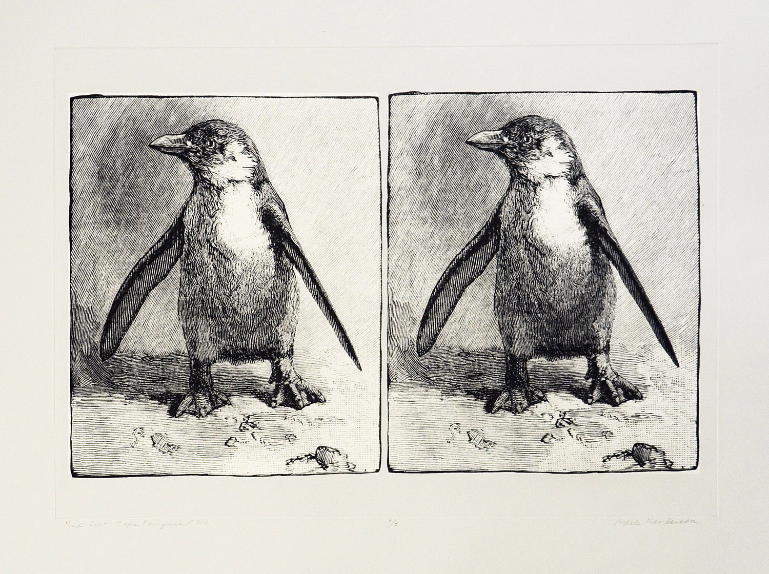Cape Penguins (intaglio)