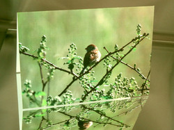 "19. ""Field Sparrow on Saturday Morn"""