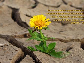 ¿Qué oportunidades se te presentan hoy que no son la voluntad de Dios?