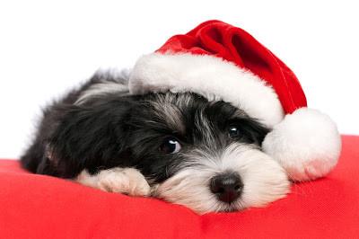 ¡¡¡ Las Navidades ya están aqui !!!
