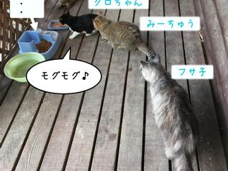猫モーニング