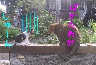 猫達のいきさつ③『厳しくします』