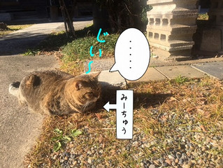 猫たちのいきさつ⑤最終回~みんなで日向ぼっこ