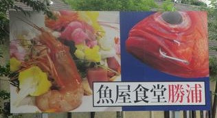 勝浦 魚屋食堂さんでランチ