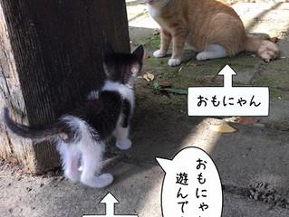 猫たちのいきさつ④眠かったんだけど。。?