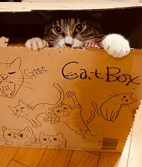 Enjoy! CATBOX
