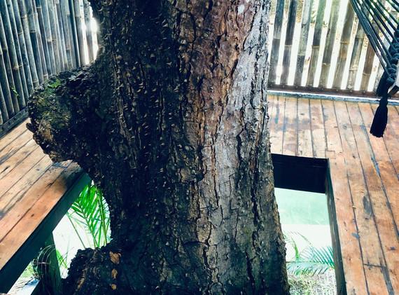 Room 6 tree detail.jpg
