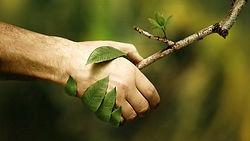 naturopathie-image.jpg