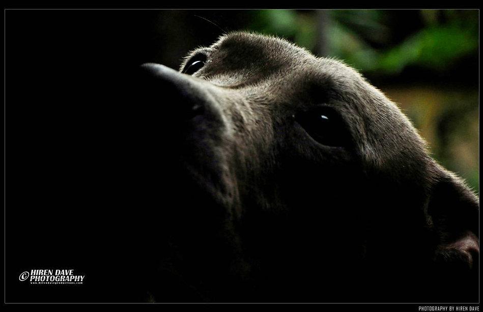 HIREN DAVE PHOTOGRAPHY_Brutos.jpg
