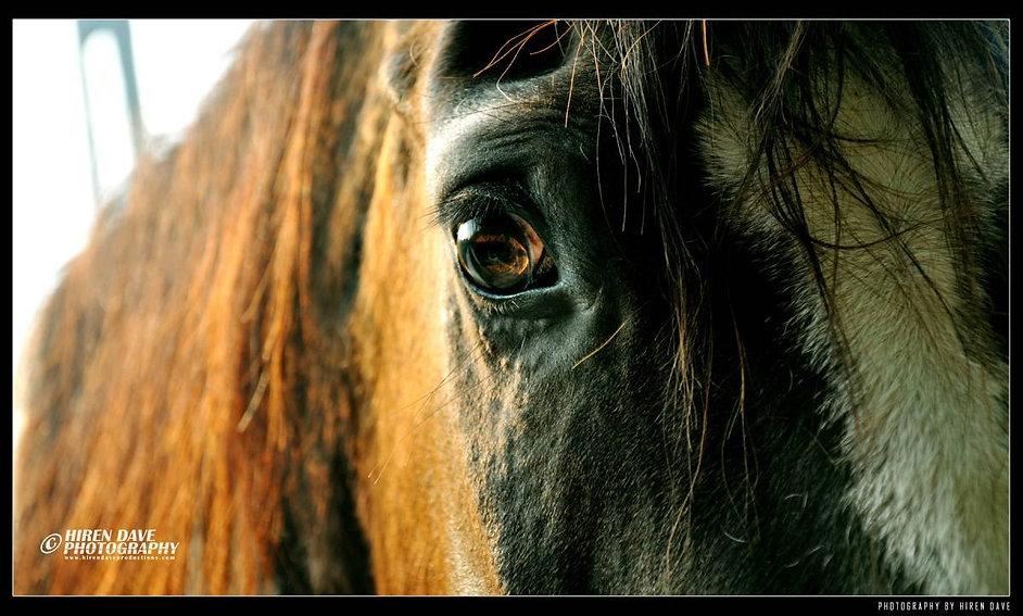 HIREN DAVE PHOTOGRAPHY_Horse.jpg
