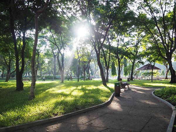 早朝の公園.jpg