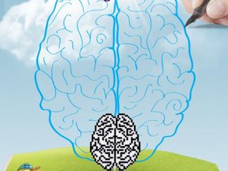 Neuroplasticity – Rewiring The Brain