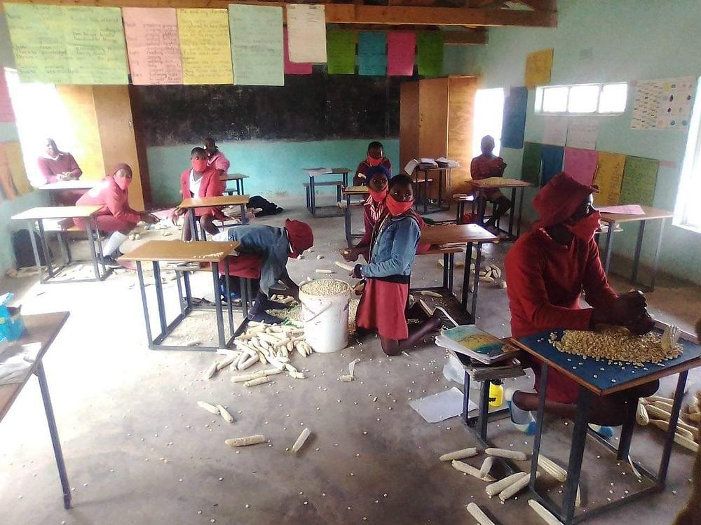Picture of Zimbabwean girls working on corn
