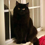 MIDNIGHT ADOPTED 1_2021