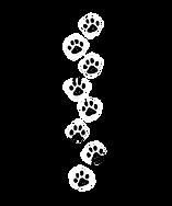 paw-print-border-dd10436_edited.png