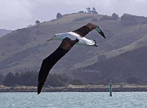 Dunedin Wildlife Tours in NZ, Private Wildlife Tours Dunedin New Zealand