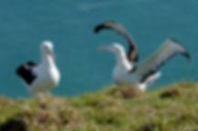 Royal Albatross Centre 03.jpg