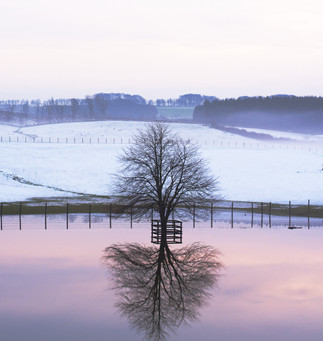 LIFE_Tree in a flood.jpg