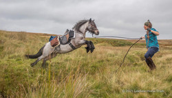 The safest way to cross a beck when in-hand walking