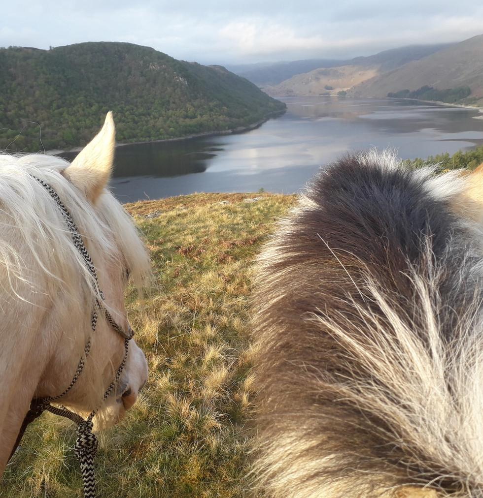 Even the horses love the scenary_6573932335450