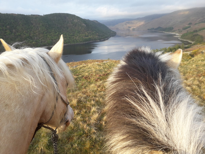 Even the horses love the view of Haweswater