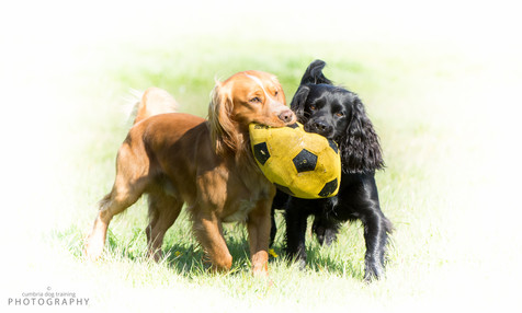 Sumo & Cash with yellow football.jpg